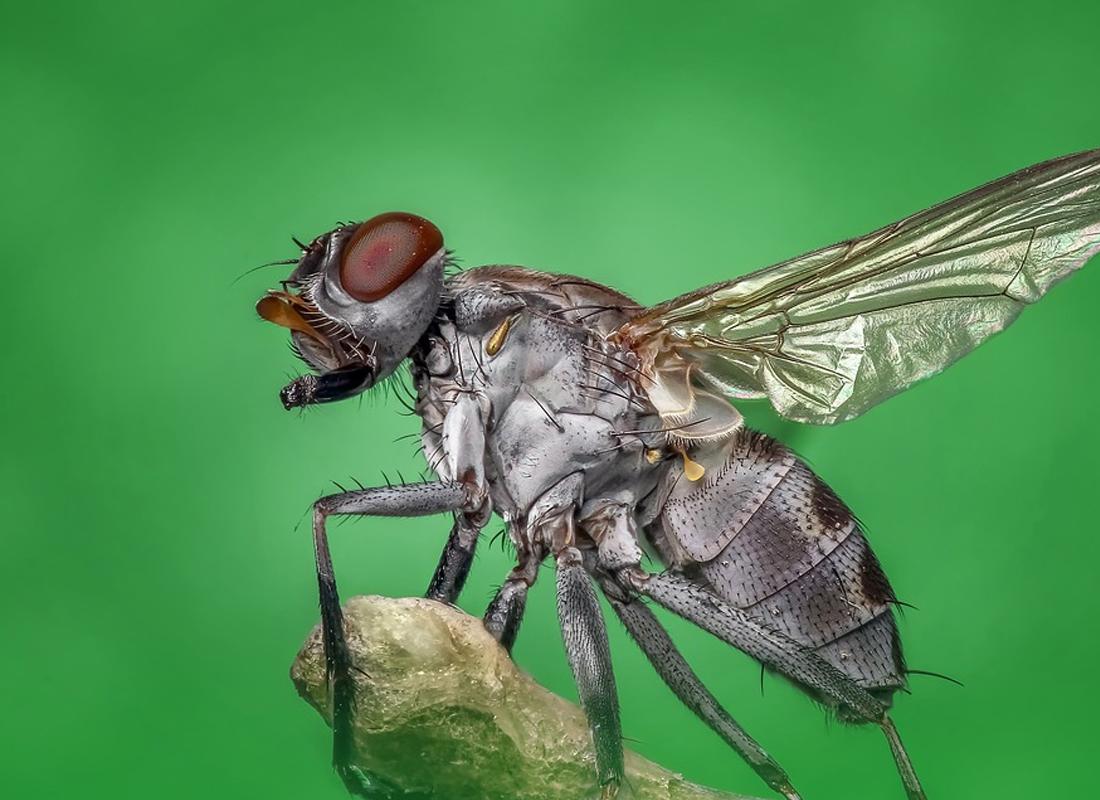 Dịch vụ kiểm soát ruồi công ty xử lý côn trùng A2Z